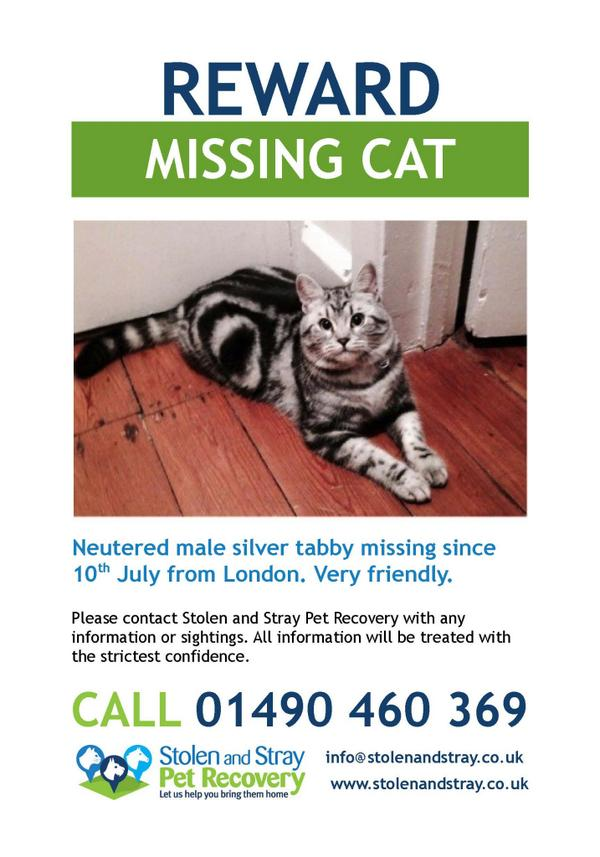 @The_Blue_Cross please RT and help me find Zeus, missing from Fulham, London since July 10th. Thank you http://t.co/c2gkCicYDI