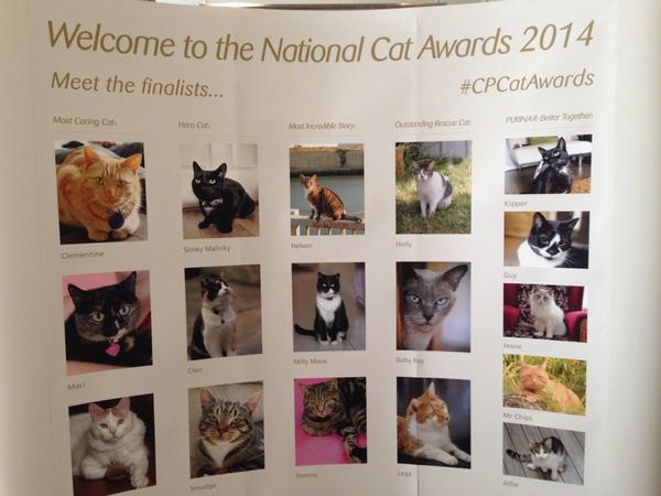 At @CatsProtection #CPCatAwards with @Chloe_YourCat http://t.co/nFIdLSeh8v