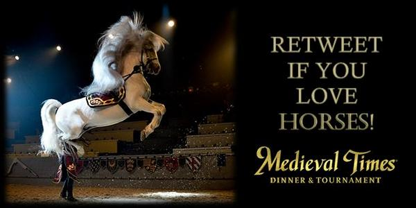 Retweet if you love #Horses! #medievaltimes http://t.co/HG4uNGfELO