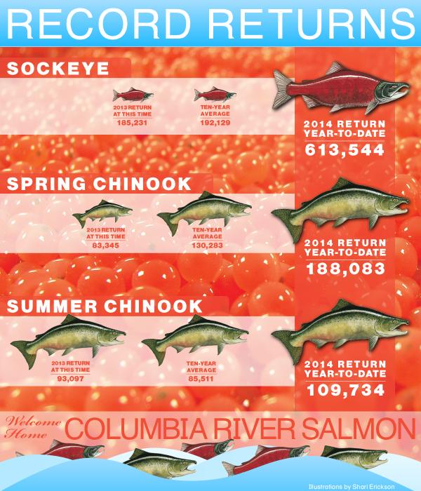 Welcome home #salmon! It's been a record setting year on the Columbia River. Check out our #infographic on returns http://t.co/a8YuFzxZxl