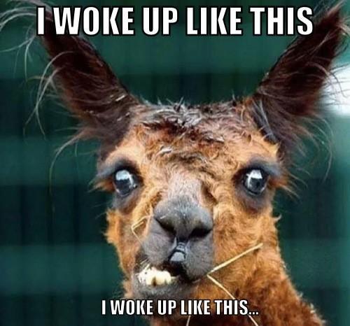 #iwokeuplikethis http://t.co/gaE2k2sTNO