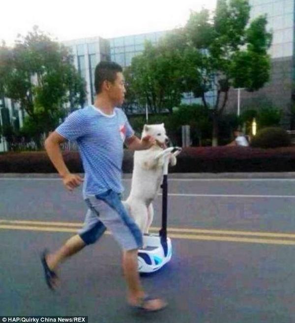 「セグウェイで犬の散歩をする中国人男性」というサイトを開いたら、想像してたのと異なる画像が出てきた件。 pic.twitter.com/QKfP519zcG