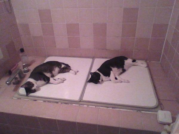 風呂はいろうとしたらねこが落ちてた  http://t.co/Ocd5dBTxyh