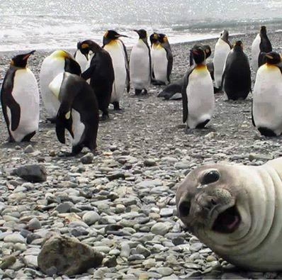 How about a Friday Fotobomb. Don't you just love nature? http://t.co/KoQdhXhP6N