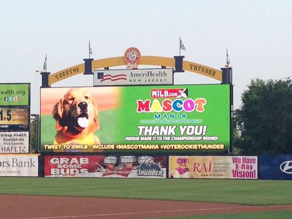 How can you not vote for that cute ball of fur! #mascotmania #voterookiethunder http://t.co/Lmgrtdx3lg