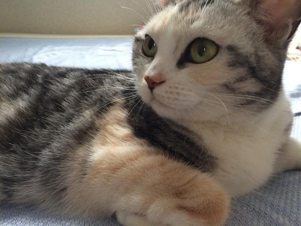 お猫「下僕、何故雨戸を閉める?」 下僕「今夜台風が来るからです」 お猫「台風とは何だ?危険なものか?」 下僕「お猫様が嫌いな大きな音がしたり、家が揺れたりするかもしれません」 お猫「恐ろしくて不安だろうから今夜は貴様と寝てやる」 http://t.co/OObJ0DfHaK
