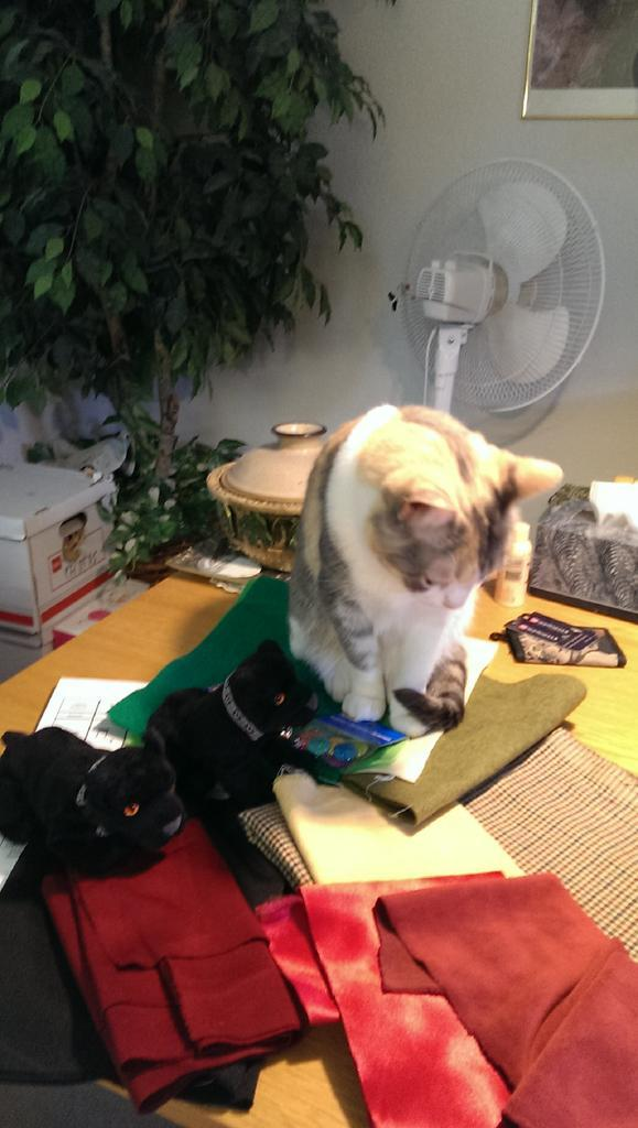 Mia helping #minibreeze inspect fabric. Meows, is that plaid I see there? http://t.co/EVM7M92dRi