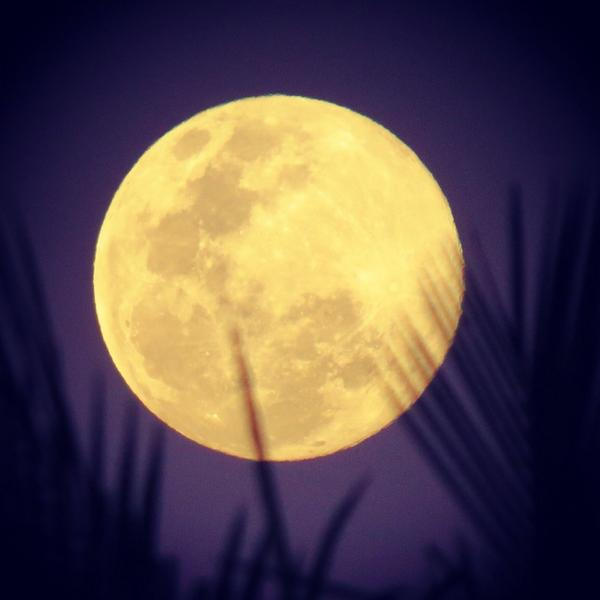 Look what popped out from behind the palm fronds! #supermoon #brisbane #thisisqueensland http://t.co/mw9fcEQ56z