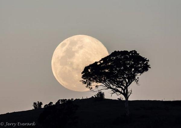 A friend (Jerry Everard) took this picture of the moon rising over Canberra this evening. #supermoon http://t.co/R11XufcFWd