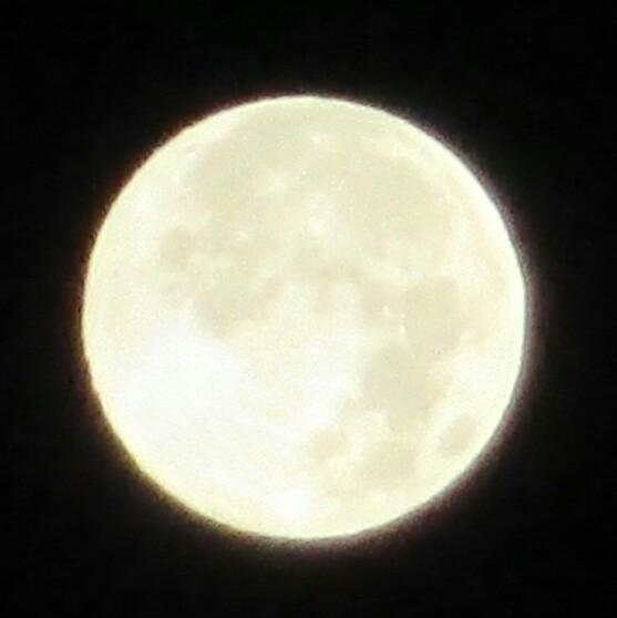 #スーパームーン東京都 南西の夜空AM3時確かに大きくて輝いてます pic.twitter.com/zBcPgw6tv9