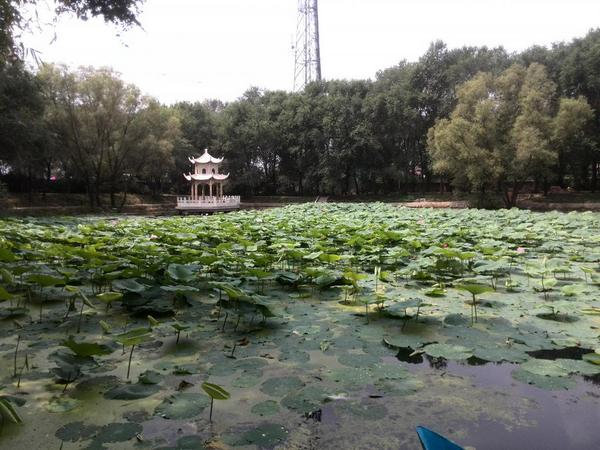 今天在家附近发现了好景致呢 http://t.co/B12Z0Bt5JK