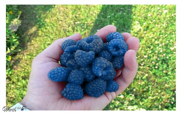 blue raspberry svenska