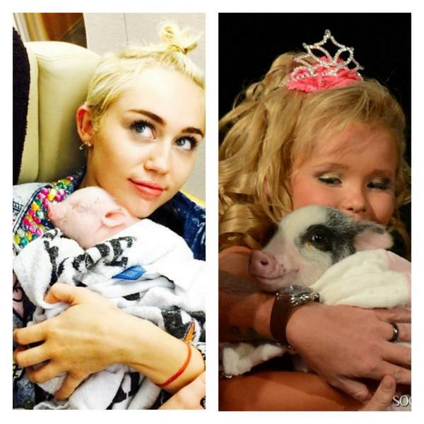 @Mileycyrus and her pig Bubba sue & Honey Boo Boo and her pig glitzy lol