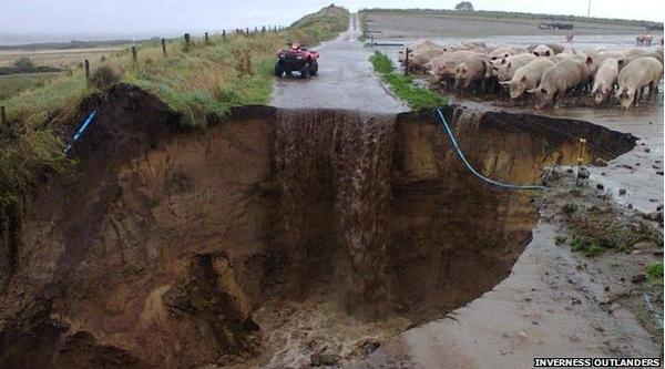 The Best Picture Of A Group Of Pigs Staring Into A Massive Hole In A Road You Will See Today #Bertha http://t.co/wylRqGC16y