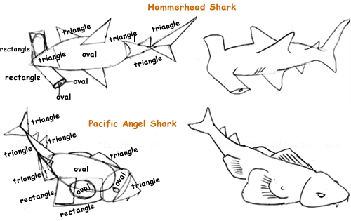 angel shark diagram wiring diagram all data Sliding Door Gate angel shark diagram wiring diagram online eye diagram angel shark diagram
