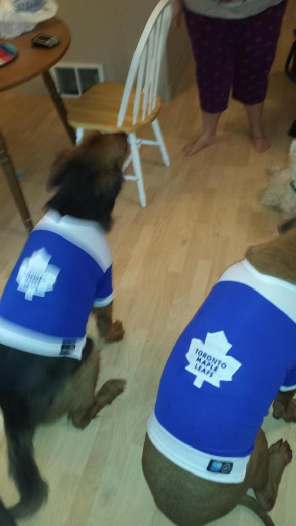 Toronto Maple Leafs On Twitter Good Dog Rt Emilythefirst Cause