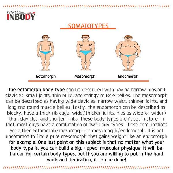 inbody fitness (@inbodypark) | twitter, Human Body