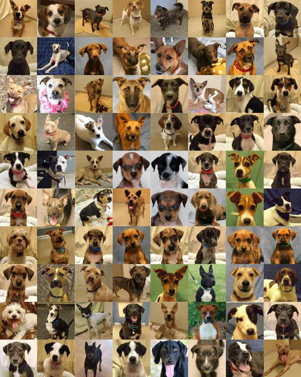 In honor of #NationalDogDay, will you share these 80+ pups available for adoption at WHS? http://t.co/BqogkdNgTi http://t.co/qZqJOTAOYd