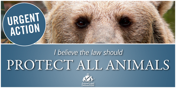 Retweet if you believe the #law should protect ALL #animals! Urgent action: http://t.co/ZA3DVB80aF http://t.co/vuGiLYDi2e
