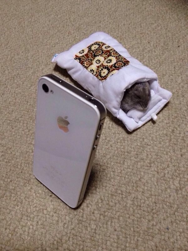 iPhone 「あ、あの…それ、私のおふとんなんですが…」ハムスター 「むにゃむにゃ、熟睡チュウ…」#スマホのおふとん pic.twitter.com/gxmJojDvTU