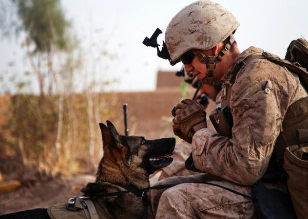 Today the #DoD celebrates the courage of canines and thanks them for serving beside our troops #NationalDogDay http://t.co/Mp8ZGA8TIm