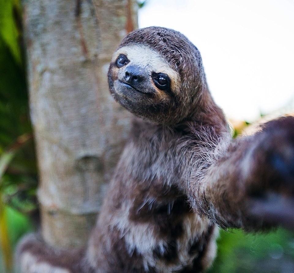 Новому, картинки приколы ленивец