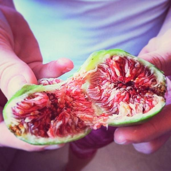 Sexfruit