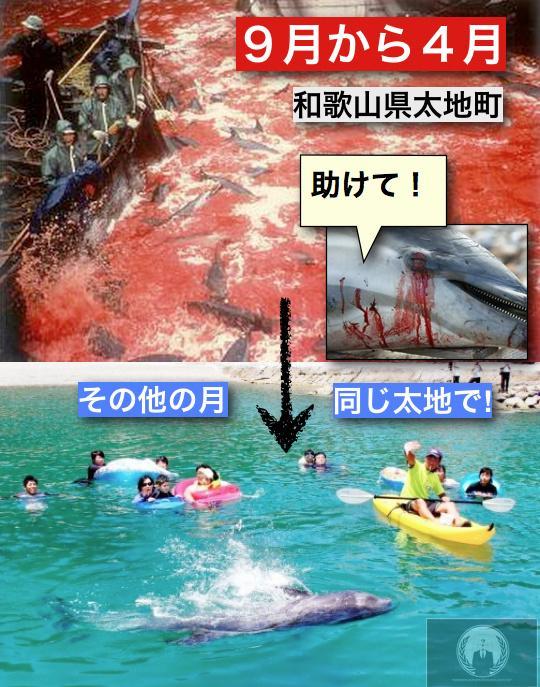 """これは…酷過ぎる。。""""@MahoSaysHellNo: .@JTBkokunai : JTBは、イルカを殺して食べていっしょに泳ぐ異常な 太地のツアーを続けますか?#OpKillingBay http://t.co/GtGAvTnwqb"""""""
