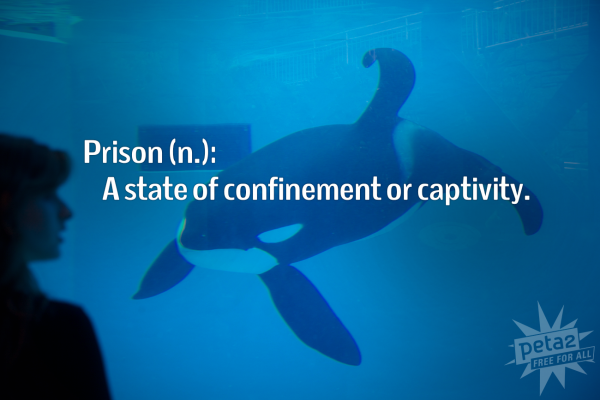 Just a bigger prison @bekahboo_13 Usually they make prisons bigger, to add more prisoners. @OrcaSOS @peta #Blackfish http://t.co/q78Mw5cQfu