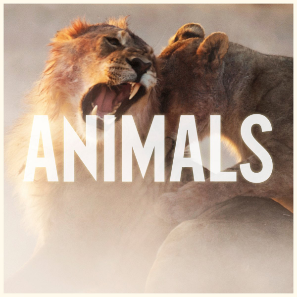 "After ""It Was Always You"" Maroon 5 releases another promotional single called Animals"" check out the cover http://t.co/02gQXlA4WX"