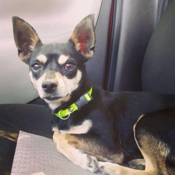 Ayúdenme a encontrar a Bruno,se salio de mi casa en Rioverde por el boulevard cerca d hotel Maria DoloresMil gracias http://t.co/RH7Du4rXDc