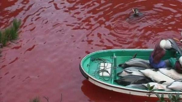 dolphin slaughter research paper Let us write or edit the essay on your topic argument papers for ( dolphin slaughter) with a personal 20% discount try it now and smart animals like dolphins deserve to live in peace additionally, killing dolphins yearly will eventually lead to extinction of dolphins  8 pages (2000 words) research paper.