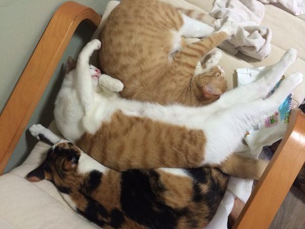 평범한 자세로는 절대 잠들지 않는 도리. 만1세1일. http://t.co/i8GCdcvJ2s