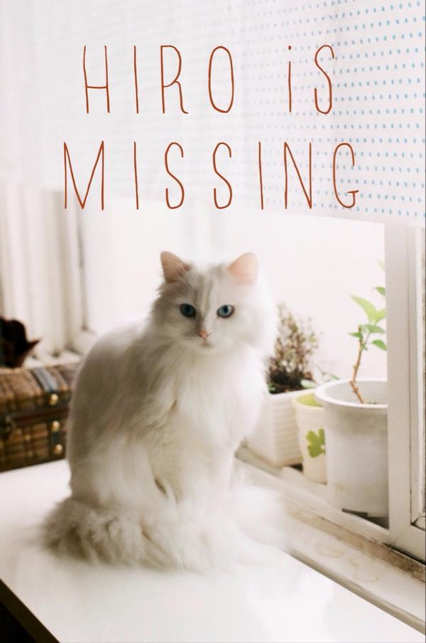 18일(월) 오전, 이태원동 258번지 부근에서 히로를 잃어버렸습니다. 파란 눈의 흰색 터키쉬앙고라 여아, 9살입니다. 하루빨리 찾을 수 있도록많이 퍼트려 주시길 부탁드립니다. #cat http://t.co/RwLFUz8kL4
