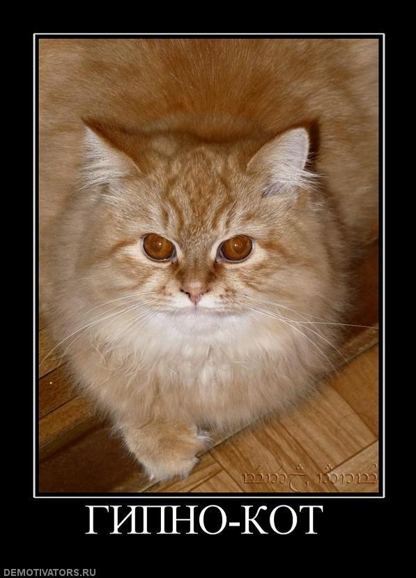 способствует злые коты демотиватор разработке ода