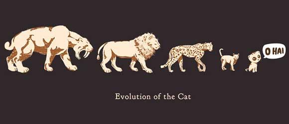 As featured in the #TEDxPoynter Talk by @benhuh - evolution of the #cat.@Cheezburger http://t.co/BwOmkAbqeR