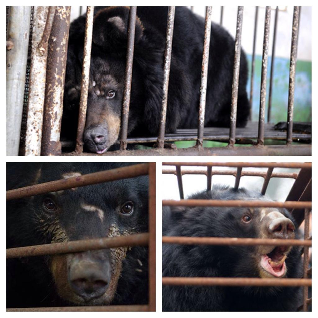 Please every1 sign this pledge let's end bear bile farming http://t.co/98a5Km3PBM  @animalsasia  #Bearinthewoods http://t.co/cmi1of8Brs