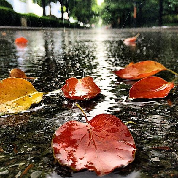 #instagram #shanghai  一叶叶,一声声,空街滴到明 梧桐树,知秋木,不道离情苦  别看图不咋地,竟然抓拍到雨丝了!出办公室买包子顺手哈腰拍雨  it's r... http://t.co/U0PRyM8Rv4 http://t.co/bwkTutB54y