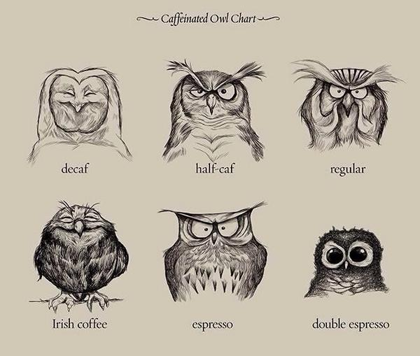 Coffee owls! : ) RT@prof_nch For @NeinQuarterly http://t.co/69Jh2p75C6