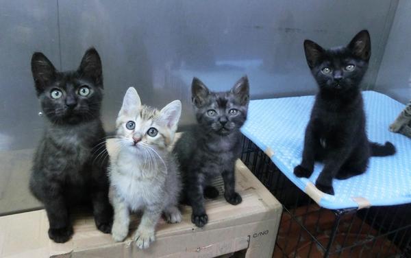 「きょうスタッフのおねーさんが言ってたんだけど、ボクたちのカリカリがあと少しなんだって。送ってもらえたらうれしいな」 毎度のことですみません。子猫用ドライをご協力いただけましたら幸いです! http://t.co/gUdH7i84qZ http://t.co/eQRclmjCkm
