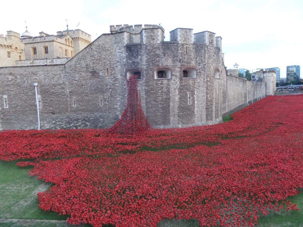 RT @HElliot357: @Chloe_Sims @elliottwright_ RT this amazing tribute to our brave soldiers TOWER#towietweettowerpoppies http://t.co/eAmc1Y2f…