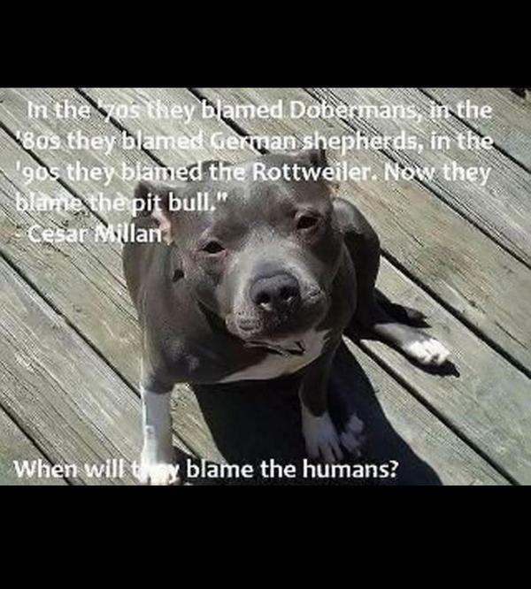 #dangerousdogs http://t.co/cj7BEsG61o