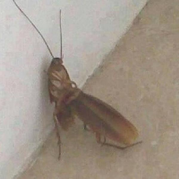 BLACKWARGREYMON On Twitter LurkGod OH HELL FUCKING NO I - Cockroach in bathroom