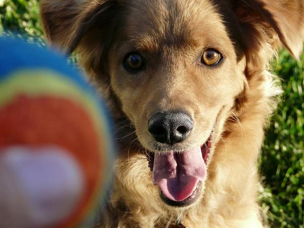 Just waking up? Don't miss our latest post, it's a whole new ball game! #dogs #science #canine http://t.co/oX2V5B4Agx http://t.co/BpaCichKJG