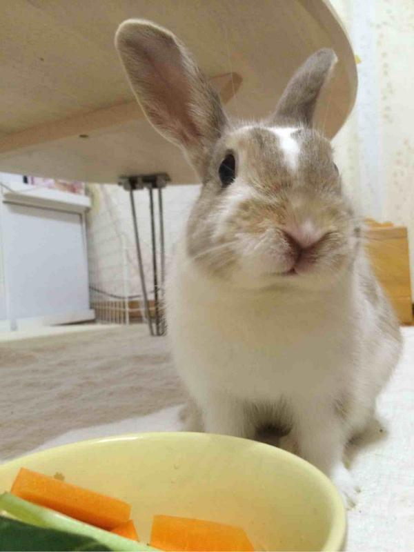 うちの愛兎です! http://t.co/qOrwfmc7QP