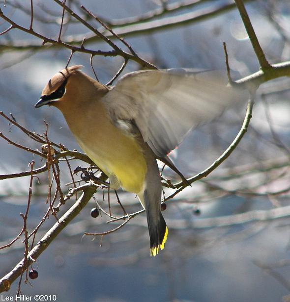 How I became a #Birder  http://bitly.com/HOP08212014 #Nature #Photography #Hiking #birds