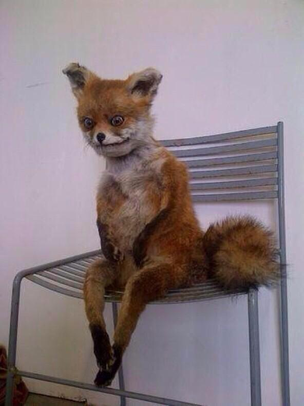Funnyquotees When You Wake Up Early In The Morning And Sit On The Edge Of Your Bed Like Pic Twitter Com Zmlivgorh
