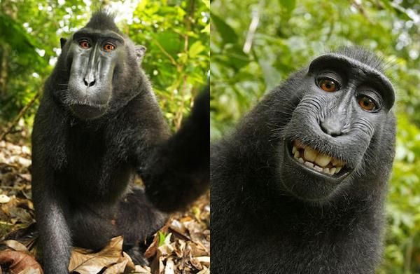 It's official: US Copyright Office declares animal selfies can't belong to humans http://t.co/owhrIQCLUE http://t.co/dwSp3yAWdR