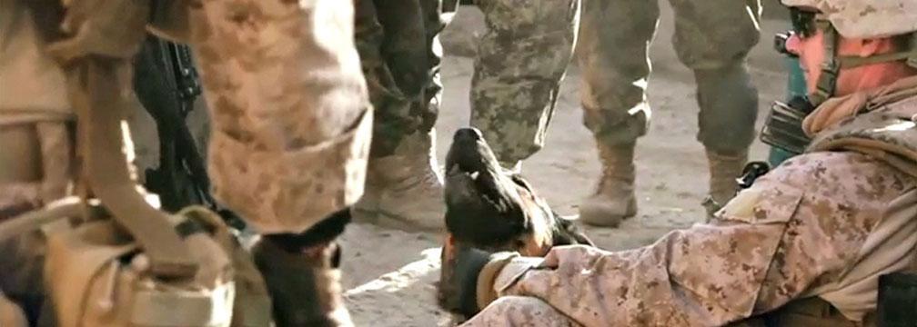Soldiers Reunited With Furry Friends From Overseas @CNN #BestFriends #ViralVideo  http://t.co/cx1kNHTuEa http://t.co/qVEHiG37qr