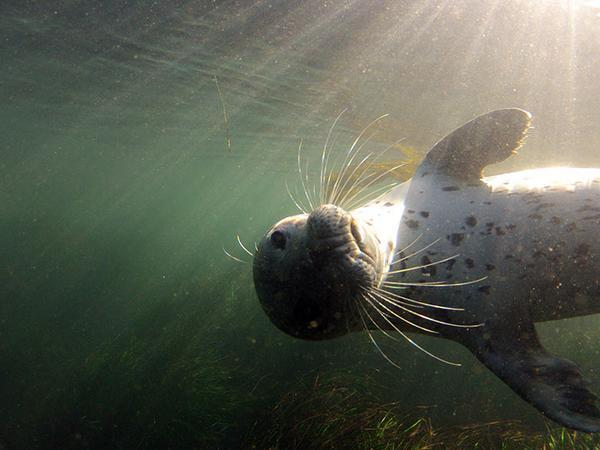 "Is this a ""sealfie""?? RT @MontereyAq: Happy Harbor Seal Friday: http://t.co/juTUnkCsB5  (@MontereyAq) http://t.co/TryLEEnQMi"